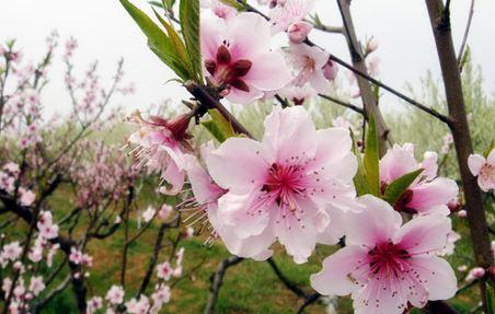 Phân tích đoạn thơ trong bài Mùa Xuân nho nhỏ