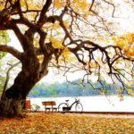 Soạn bài Mùa lá rụng trong vườn