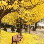 Cảm nhận tinh thế về thời khắc giao mùa trong bài Sang thu