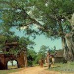 Soạn bài làng