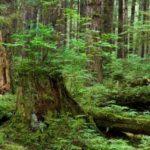Vai trò của cây cốitrong việc bảo vệ môi trường sống