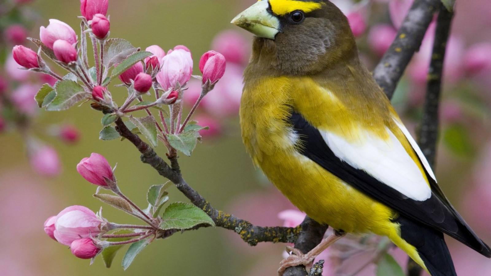 Cảm nhận về bài thơ Mùa xuân nho nhỏ của Thanh Hải