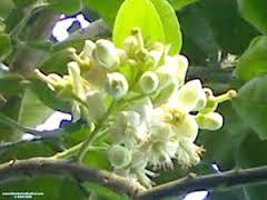 Phân tích bài ca dao trèo lên cây bưởi hái hoa... ( mẫu 2 )