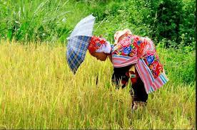 Phân tích bài thơ Khúc hát ru những em bé lớn trên lưng mẹ của Nguyễn Khoa Điềm