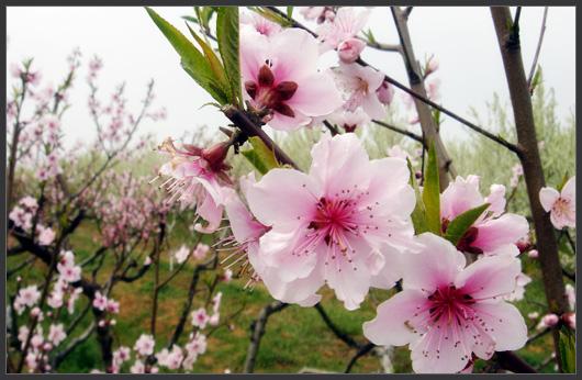 Phát biểu cảm nghĩ về bài Mùa xuân của tôi của Vũ Bằng