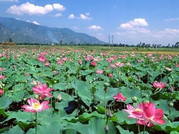 Soạn bài cảnh ngày hè của Nguyễn Trãi