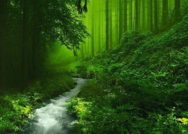 Tuần 8: Chính tả Kì diệu rừng xanh