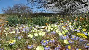 Giữa một vùng sỏi đá khô cằn, cây hoa dại vẫn mọc lên
