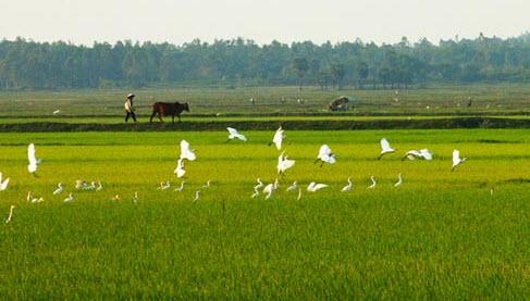 Lập dàn ý bài văn tả cảnh buổi sáng trên cánh đồng