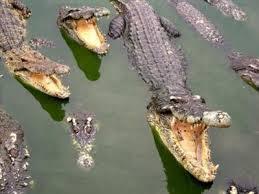 Soạn bài bắt sấu rừng U Minh Hạ của Sơn Nam