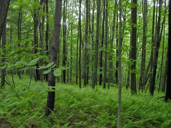 Soạn bài rừng xà nu của Nguyễn Trung Thành