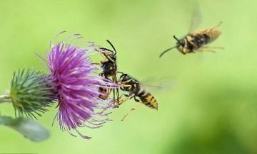 Soạn bài: Tập đọc Hành trình của bầy ong