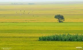 Soạn bài: Tập đọc Hạt gạo làng ta
