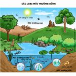 Môi trường sống và các nhân tố sinh thái