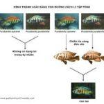 Quá trình hình thành loài