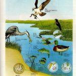 Trao đổi vật chất trong hệ sinh thái